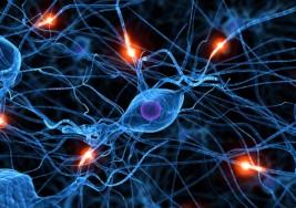 Exceso de células corticales como causa del autismo