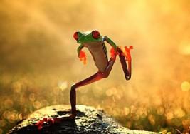 La rana que no saltaba – Un cuento que nos hace reflexionar