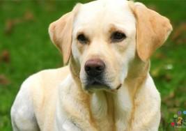 Joven con Síndrome de Down da su vida por su perro en explosión en Argentina