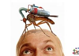 Diez consejos para huir de los mosquitos