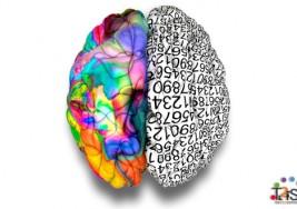 Neurociencia: ¿con qué parte del cerebro respondes a la vida?