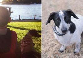 Un niño con autismo salva a un perro de ser sacrificado y éste le corresponde con su fidelidad