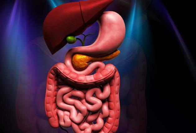 Autismo tratado a través del sistema gastrointestinal | Todos Somos Uno
