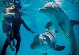 Terapia con delfines ayuda a niños con síndrome de Down y autismo
