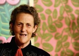 """El autismo con """"Temple Grandin"""": Una mente fascinante"""