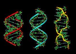 Ahora los cientistas son capaces de 'cortar' el VIH de ADN humano