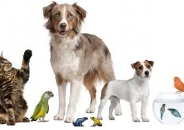Tener una mascota en la familia ayuda a la salud física y emocional de sus dueños