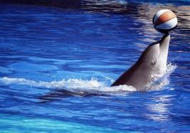 Delfines ayudan a tratar a niños con autismo y síndrome de Down
