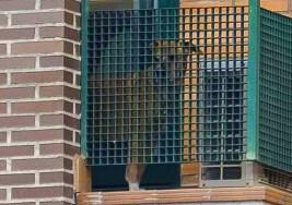 Muere Excalibur, el perro de enfermera infectada por ébola