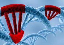 Cada mutación genética se asocia a distintos síntomas en el autismo