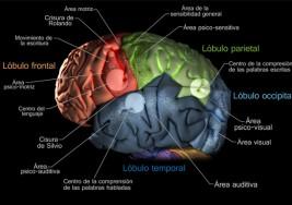 Nuevos hallazgos sobre el funcionamiento del cerebro de las personas con autismo