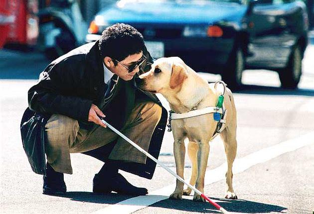 Cómo Ayudan Los Perros Guía A Los Ciegos Todos Somos Uno