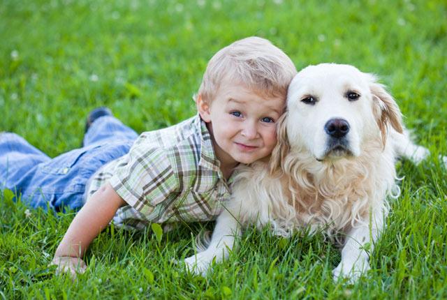 Perros, gatos e incluso arañas de mascota pueden ayudar a niños con autismo