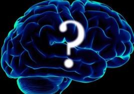 Neuronas desorganizadas ayudan a explicar el autismo