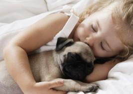 Beneficios de los perros para niños con autismo