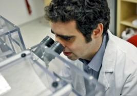 Un gen mutado causa discapacidad intelectual y autismo