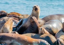 Los leones marinos que ayudan a niños con autismo