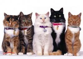 Los gatos son de gran ayuda en el autismo infantil