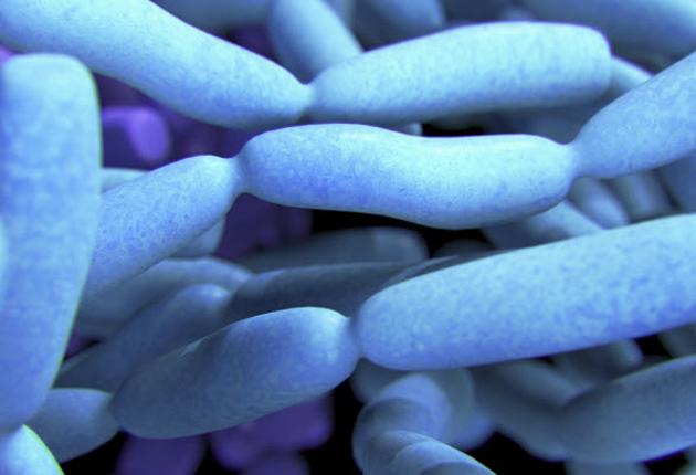 Probióticos como prometedor tratamiento del autismo