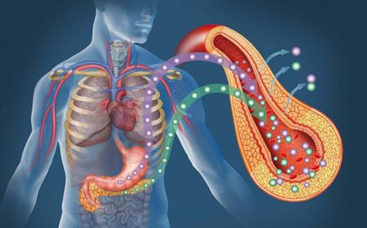 La berberina, el extracto herbal para combatir la diabetes tipo 2