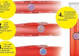 Tres biomarcadores avisan del riesgo de esclerosis múltiple y alergias antes de los síntomas