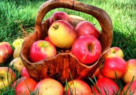 Una campaña con manzanas contra la esclerosis múltiple recauda 66.000 euros