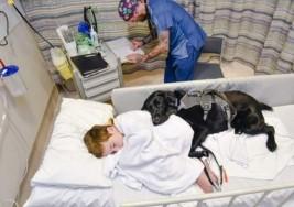Un niño de nueve años con autismo y su perro, inseparables incluso en la cama del hospital