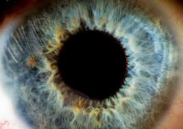 El primer ensayo humano con optogenética podría devolver la vista a ciegos