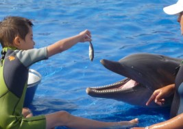 Terapia con delfines para tratar a niños con síndrome de Down