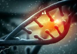DETECTAN 66 GENES RELACIONADOS CON EL AUTISMO EN SANGRE Y CEREBRO