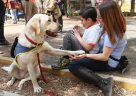 Una perra labrador retriever, la mejor amiga de niño con autismo
