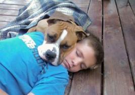 Niño con síndrome de down se pierde y su perro boxer lo cuida