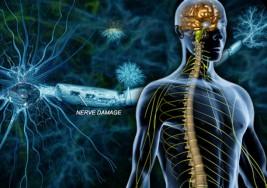 Descubren cómo neutralizar células que causan esclerosis múltiple