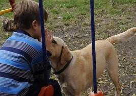 Cómo un perro le cambió la vida de un nene con autismo