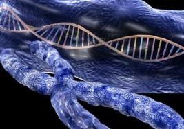 Descubren el primer gen asociado al origen de la esclerosis múltiple