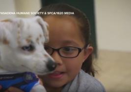 Niña le enseña lenguaje de señas a su perro con sordera