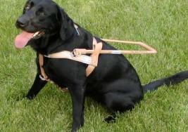 Así nació la primera escuela de perros guías de Latam