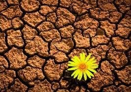 Resiliencia, capacidad para afrontar las adversidades