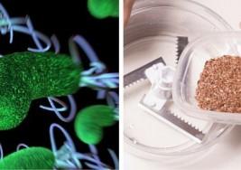Con estos dos ingredientes limpiarás tu cuerpo de parásitos