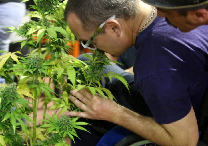 México da el paso para legalizar la marihuana medicinal