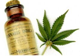 Avances. Jerusalem utiliza aceite de marihuana como paliativo para niños con autismo