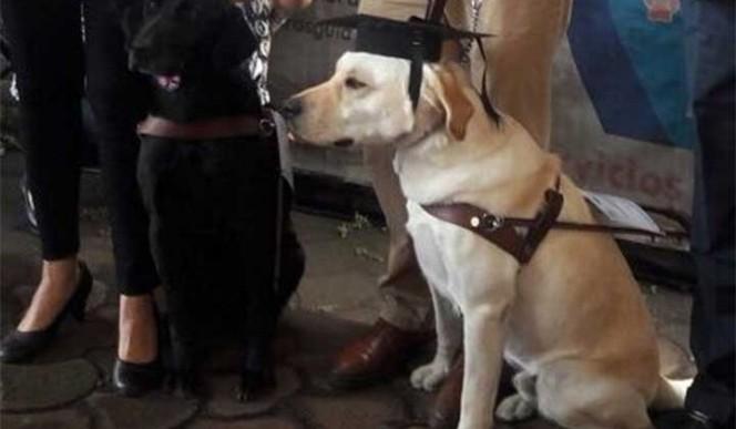 6 perros se titulan para guiar ciegos