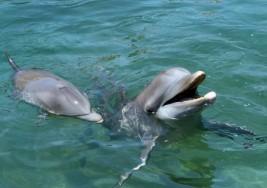 Ni para shows, ni para terapias; la CdMx prohíbe espectáculos y terapias con delfines