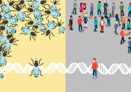 Abejas que no responden a los estímulos sociales comparten genes con personas autista