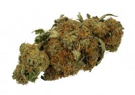 La marihuana medicinal ayuda a los niños con parálisis cerebral