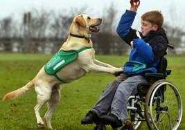 Perros de terapia para niños con discapacidades