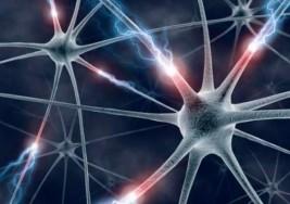Un nuevo trazador mide el daño causado por la esclerosis múltiple