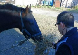 Recuperaron el caballo terapéutico que le habían robado a un joven con síndrome de Down
