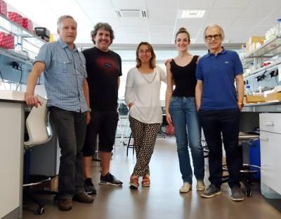 Hallada una clave molecular para retrasar la progresión de la Esclerosis Múltiple