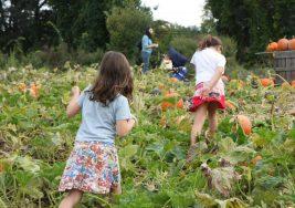 El primer vínculo entre insecticida y autismo